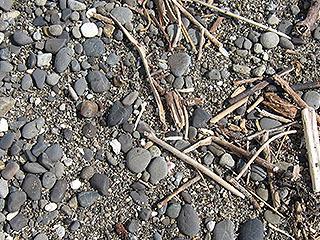 すべすべの石も落ちてて河原っぽい。