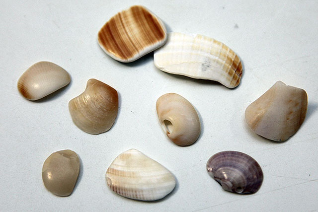 貝殻が丸くなってて可愛い。ガラスの破片とかもすべすべしてた。すべすべマニアには堪らない海岸である。