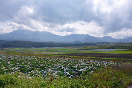 ここが日本モータースポーツの聖地!(説得力なし)