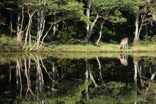 この日は湖面の状態がすこぶる良く、写り込みが素晴らしかった