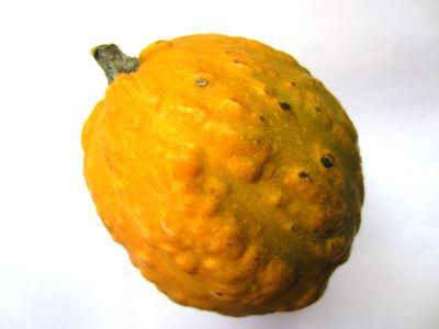 エントリー11:なんか、見た目、ユズみたいだよね…みたいなかぼちゃ
