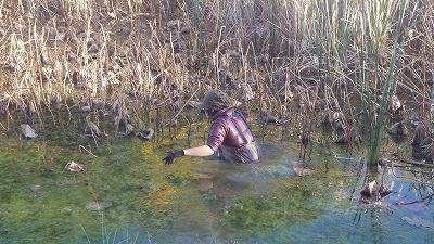 魚を驚かさないよう出来るだけそっと入水。