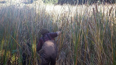 沼の中で藪こぎすることになるとは…。