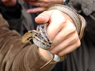 手に絡みつかれたときには幸福感さえ感じてしまった。でもヘビ的には、マジで噛みつく5秒前。