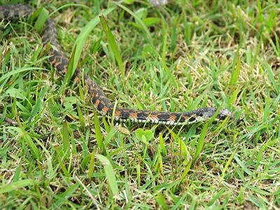 このヘビ、絶対に素手で触らないでください。