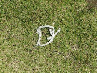 珍しい白蛇かと思ったらヒモだった。こういう間違えが本当に多い。