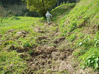 ちょっと山に入ると、イノシシが歩いた後だらけ。イノシシ狩りもしてみたいなー。