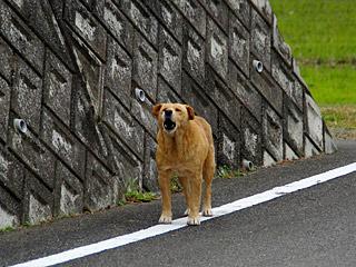 久しぶりにノラっぽい犬に吠えられた。