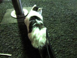 ネコに遭遇。さわらせてくれるネコだった。