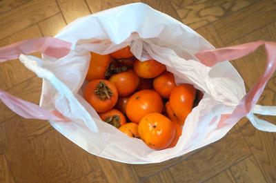 本記事はシナボンをこわがっていたら最終的に大量の柿を得ていたというサクセスストーリーでもあります