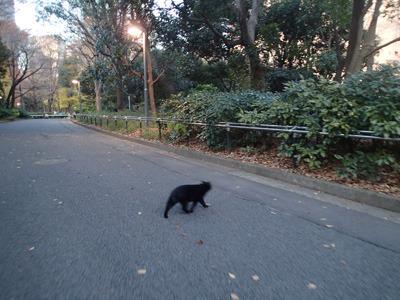 猫は逃げました。