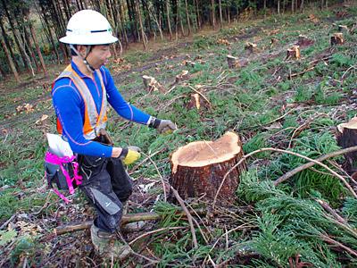 伐採の現場はとても危ないので、エアー伐採。