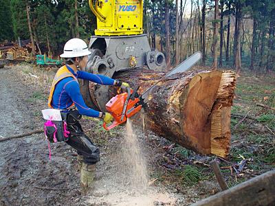 堅い材木に1メートルの刃が吸い込まれていく。