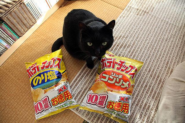 うちの猫、なつめさんは猫としては相当でかいのだが。