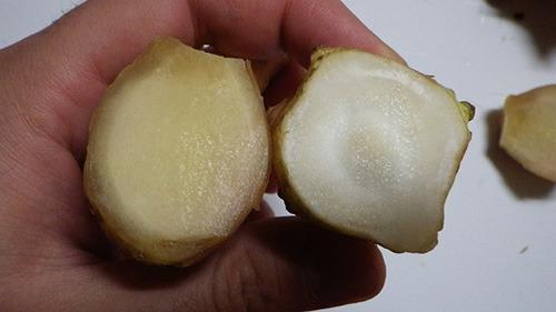 左がショウガ、右が菊芋の断面。