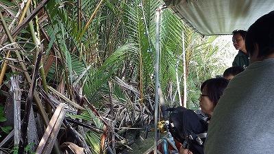ニッパヤシが生い茂るマングローブエリアも。