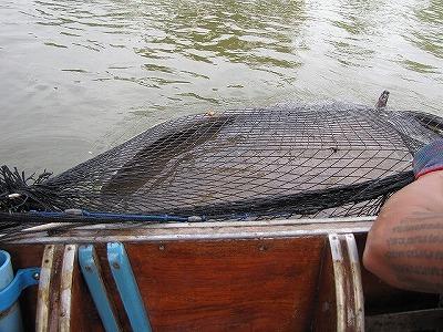 網にすっぽり包まれる巨大エイ