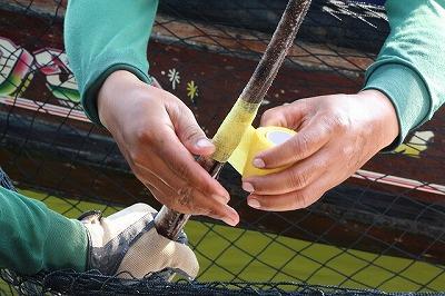 無事にエイが網に入ったらまずやることはテープで毒針を固定してしまう。