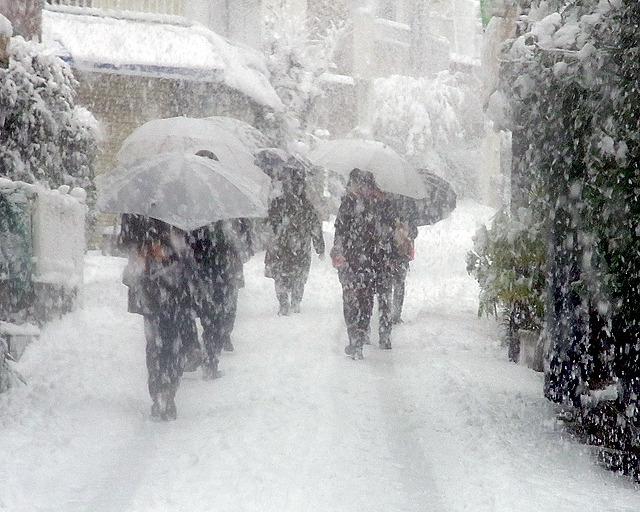 東京に大雪が降った1/14に、地上にヘビの絵を描くために大勢で10km歩いてきました。改めてすごい雪だったと思う写真が連続、細かいところに積もる雪の器用さにも驚きです。(古賀)