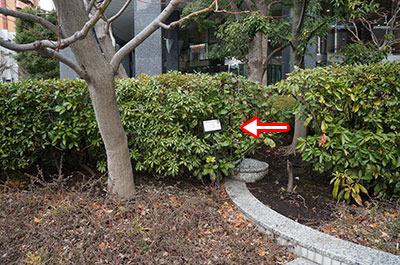 植え込みの木に名札がついてるのは珍しい