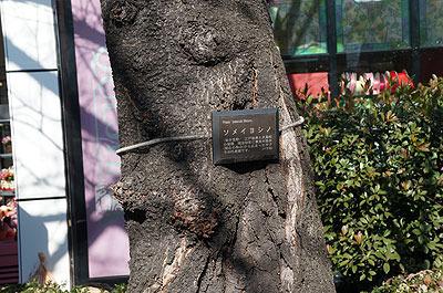サクラと木の名札、日本の心の集大成のような一枚
