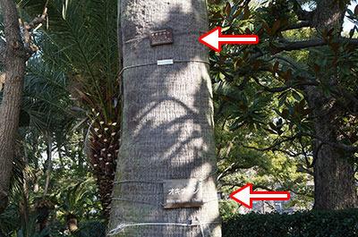 これにいたっては1本の木に2つも書いてある。ほんとにそんなに知らせたいの!?