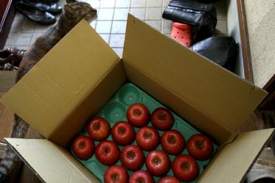 弘前に親戚がいるお陰で、毎年リンゴが食い放題