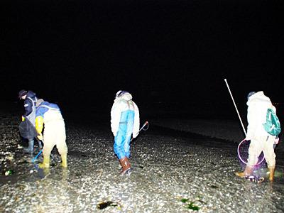 懐中電灯で照らしながら、延々とタコを捜し歩く。