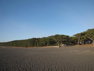 松原が広がっているよ。