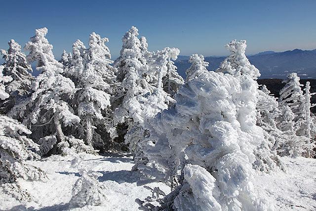 暖かくてあんまり育ってないけど、「モンスター」と呼ばれる樹氷。