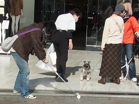 隅っこにある綿ぼこりが気になる犬と私