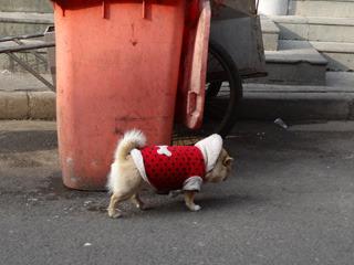 服を着た犬でも放し飼い