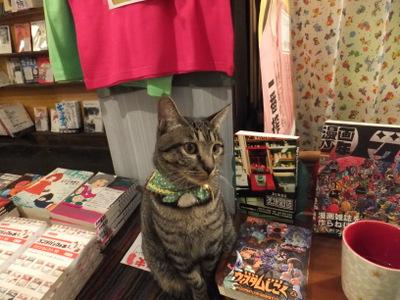 「にゃん太」という極端に人懐っこい猫を飼っている