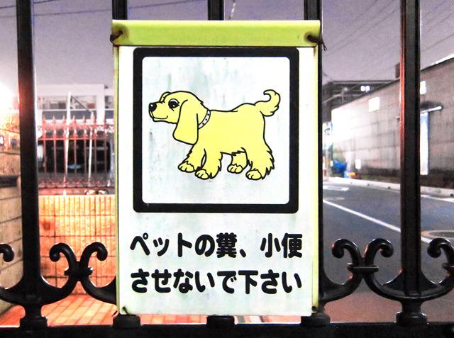 戸田市にもいた!淡々と犬表現。すごんだり申し訳なくなっていたりしない。
