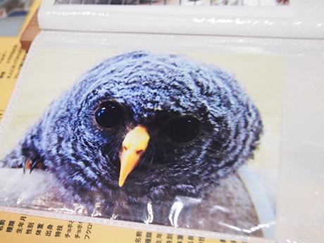 鳥山さんを打ち抜いた初代フクロウ。なるほど、これはヤラれる。