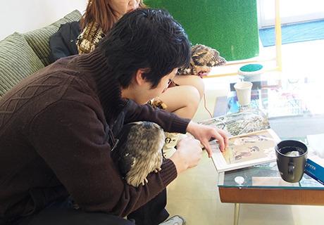 フクロウを手元に、フクロウの写真を見る人