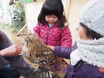 もしかしたらこの子たちも将来鳥カフェを作るのかも知れないぞ。