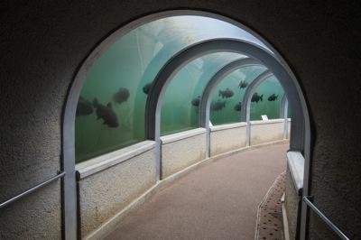 魚のトンネル!