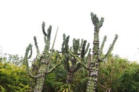 植物も珍しいものがあって面白い