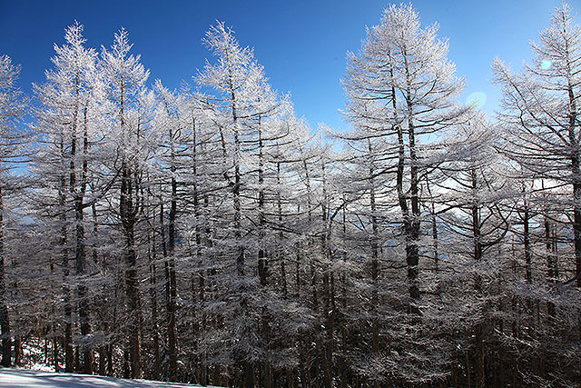 青空に霧氷が映える。