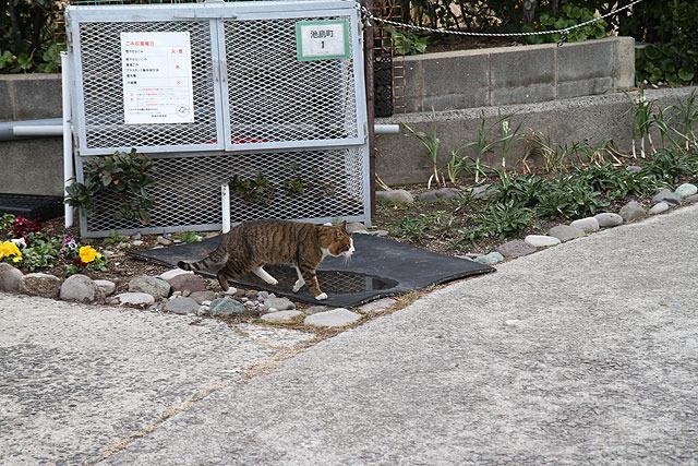 猫がものすごく多い。池島では人間よりも猫の方が多く見かけた。