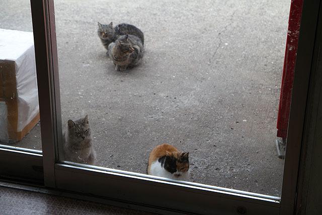 店内の様子をうかがう猫たち。