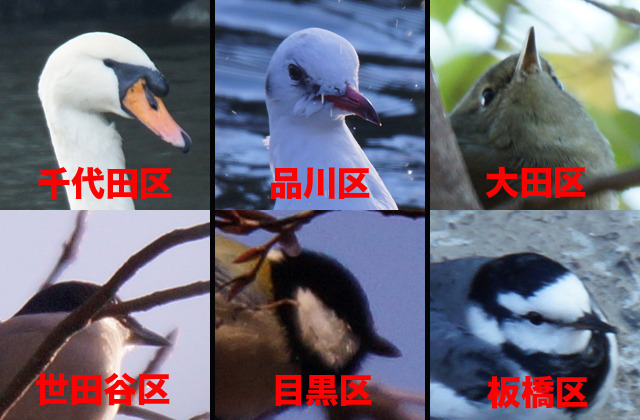 「区の鳥」ウォンテッド!