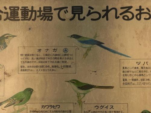 昭和43年7月に晴れて区の鳥に。