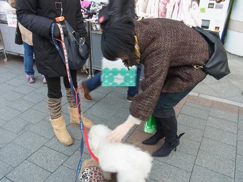 イタリアのブーツに引き寄せられたオシャレな犬達