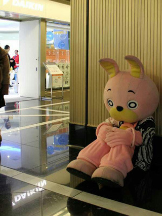 初めて出会った時のウサヒは、ダイナミックな動きをしたと思えば、こんなふうに膝をかかえたり……自由でした(ダイキン工業フーハ東京にて)