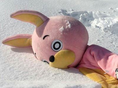 朝日町の雪にまみれるウサヒ…。
