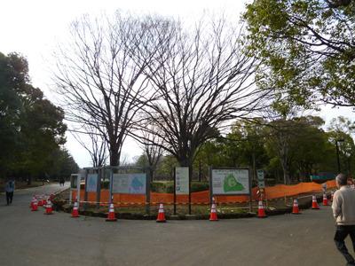 コーンとかフェンスに彩られた冬の代々木公園。