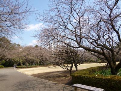 こちらも桜はまだですが、