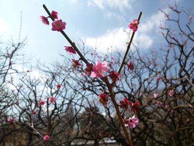 木々に花はちらほらと。
